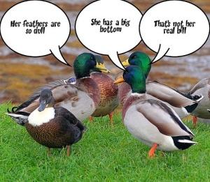 gossip-ducks